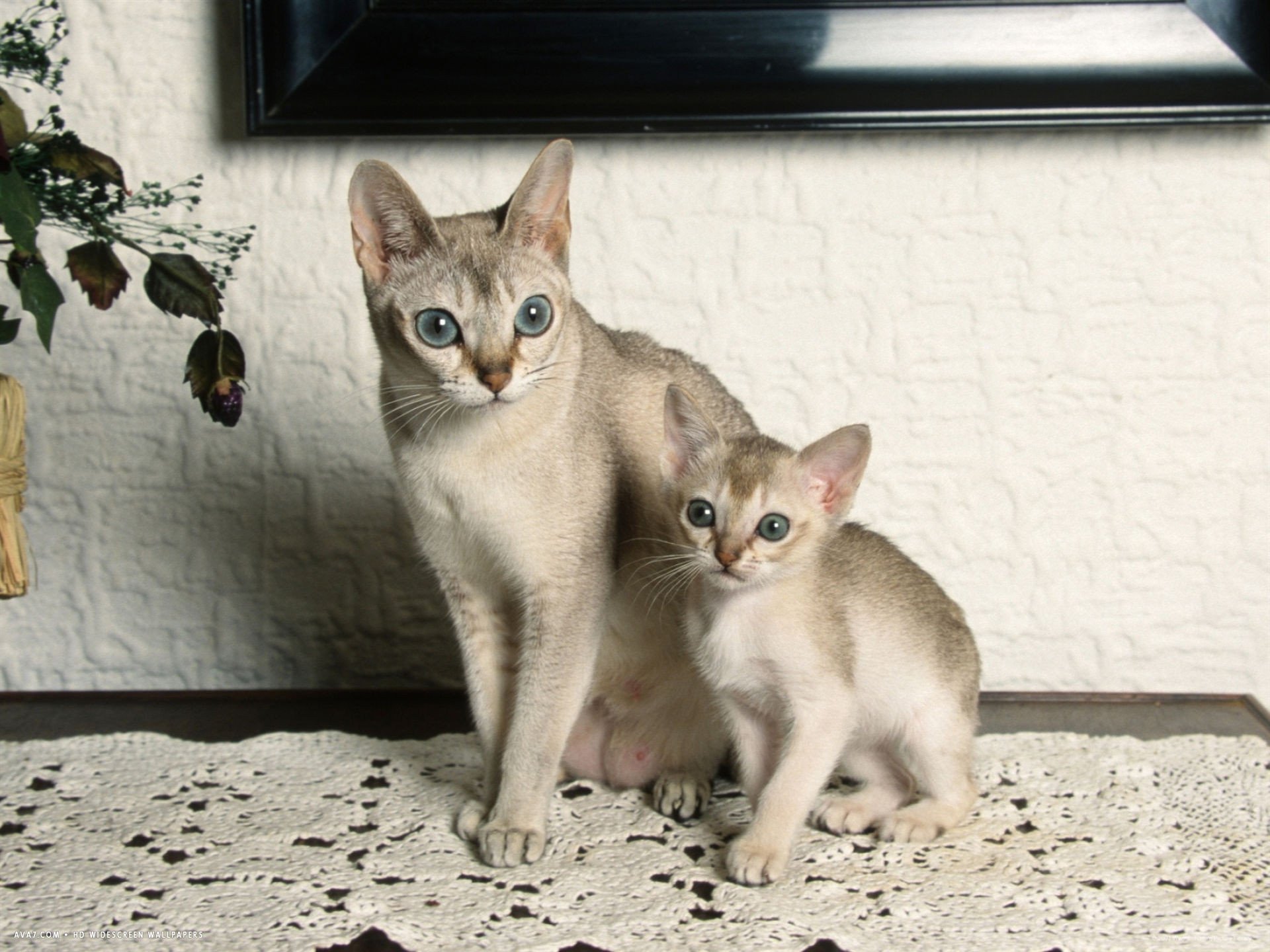 Small cats
